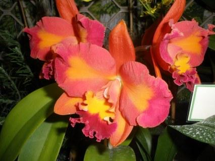 Gympie Plant 2012