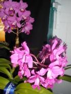 Gympie Plant