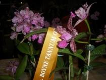 C.Caudebec Candy (Gympie Plant)